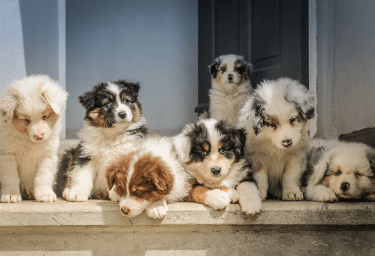 photo of puppies showing unique coloration