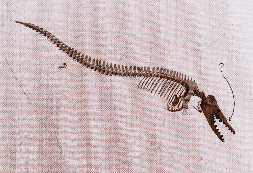 fossil of whale