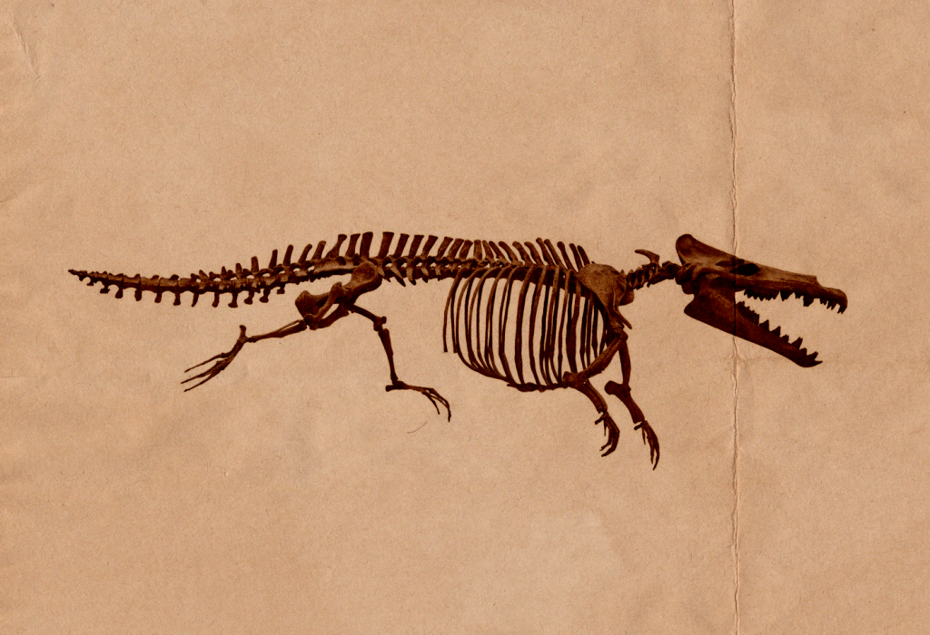fossil of maiacetus
