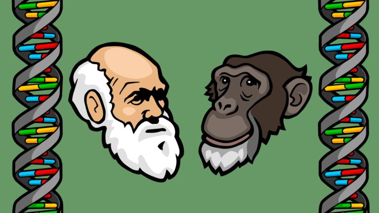 Darwin Chimp Endogenous Retrovirus